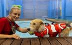 رفاهية ودلال باكبر فندق للحيوانات في العالم في كيب تاون