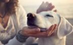 اللعب مع الكلاب أو القطط الاليفة يقلل من توتر الطلاب