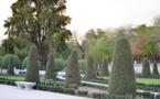 """قصة شجرة """"الأواويتي"""" جدة أشجار أقدم حدائق مدريد"""