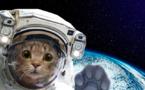 مشروع عالمي لرصد حركة الحيوانات جوا وجمع البيانات عبر الفضاء