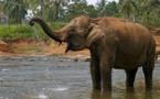 إضافة 10 أنواع إلى قائمة  الحيوانات المعرضة للانقراض