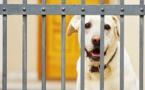 هونج كونج تضع كلبا بالحجر الصحي للاشتباه في اصابته بكورونا