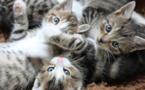 القطط تحب الروتين وتفضل المكوث في المنزل على الرحلات!