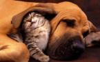 دراسة : الإنسان قد ينقل عدوى كورونا للقطط والكلاب