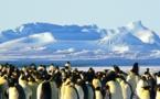 الأقمار الاصطناعية تكشف عن مستعمرات للبطريق بالقطب الجنوبي