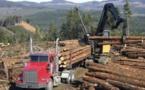 قطع الأشجار يصل إلى مستوى مأساوي بالأمازون في البرازيل