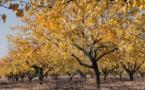 """ملاطية عاصمة  المشمش.. ألوان الخريف تصبغ """"الجنة المخفية"""""""