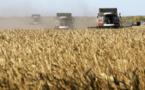 """""""عام القمح"""".. الإحصائيات تنذر بأزمة خبز أكبر في سوريا هذا العام"""