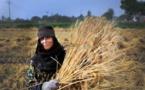 التنمية المستدامة ودور المرأة الريفية في اقتصاديات الدول النامية